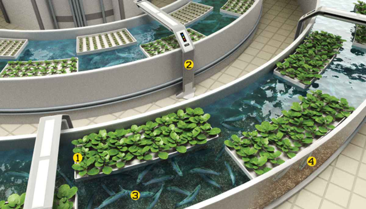 AQUAPONICS - vertical farming italia