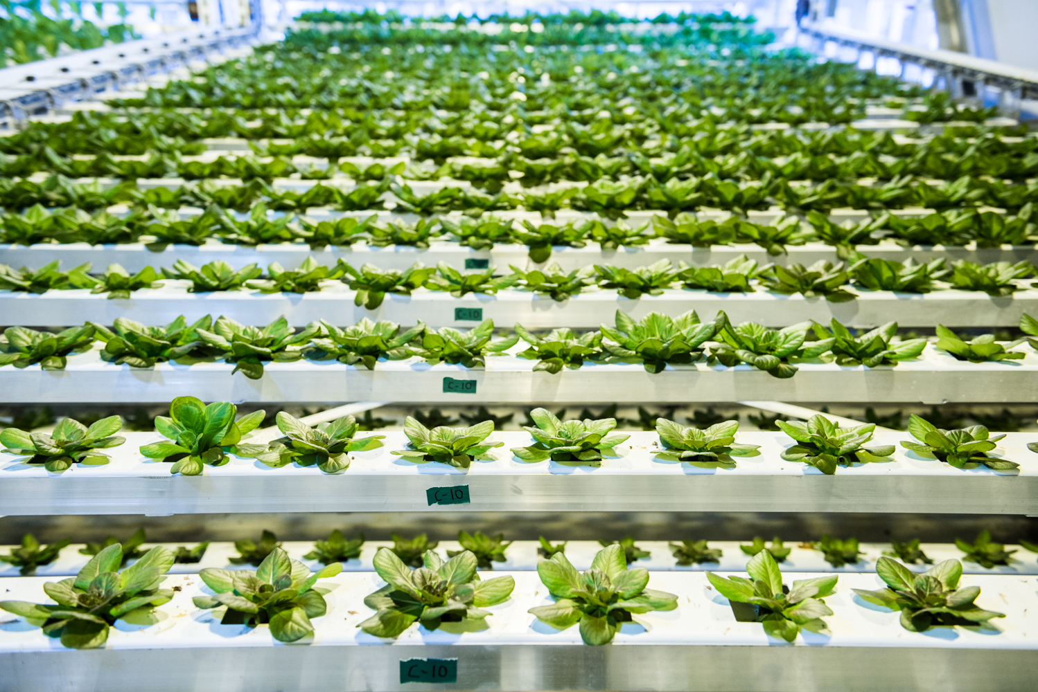 Vertical Harvest - vertical farming italia