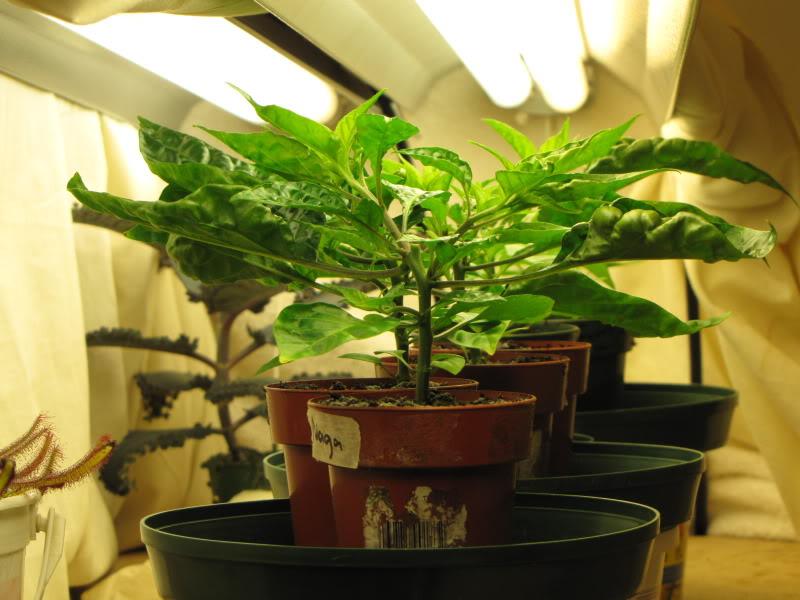 lampade indoor cfl - lampade fluorescenti a basso consumo